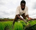 #Africa's Catalytic Agricultural #Innovations  #AR&D @Africafarming @FmardNg @Africa_matters | Agriculture, Climate & Food security | Scoop.it