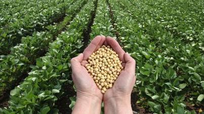 Etude scientifique : des résidus de roundup plus importants dans l'alimentation OGM | Toxique, soyons vigilant ! | Scoop.it