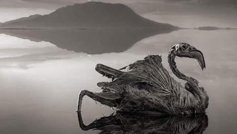 Un mystérieux lac africain pétrifie les animaux | Ca m'interpelle... | Scoop.it