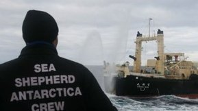 Japan, Australia, Sea Shepherd: a whale of a legal web - The Drum Opinion (Australian Broadcasting Corporation) | International Court of Justice | Scoop.it
