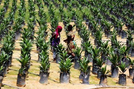 Agro-industrie: Olam a injecté 1,5 MM$ au Gabon | Questions de développement ... | Scoop.it