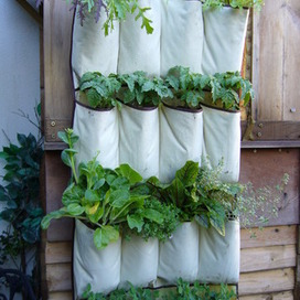 VERTICAL VEGETABLES: Grow up in a small garden and confound the cats! | Agriculture urbaine, architecture et urbanisme durable | Scoop.it