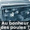 Ramassage des poules à Kingersheim : passez votre chemin, il y a rien à voir | L214, éthique et animaux | Nature Animals humankind | Scoop.it