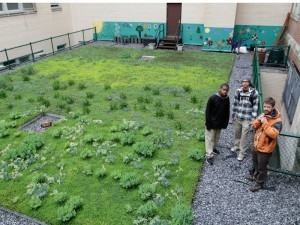 Experiments on Bronx school's green roof taking students far - GothamSchools | Vertical Farm - Food Factory | Scoop.it