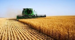 The WTO, Agriculture and Food Safety | Food issues | Scoop.it