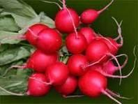 Uso Medicinal del Rábano | El rábano (Raphanus sativus) y el nabo (Brassica rapa) | Scoop.it