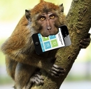 IMS mHealth Report: It's an App Jungle. Will the Fittest Apps Survive? | Healthcare industry buzz | Scoop.it
