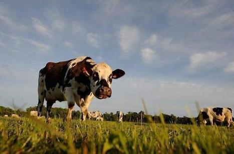 Le lait normand n'a plus besoin de quotas | Ouest France Entreprises | Actualités Orne | Scoop.it