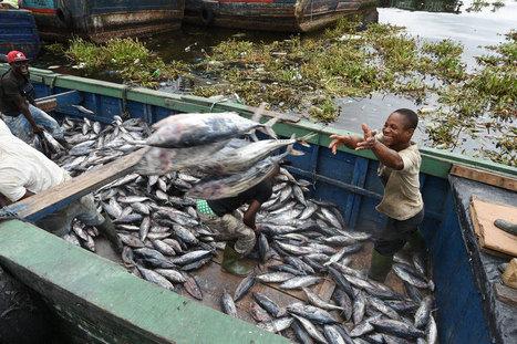 Centre d'actualités de l'ONU - La FAO appelle à une mise en œuvre rigoureuse et effective du traité mondial contre la pêche illégale | HALIEUTIQUE ECOLOGIE MARINE | Scoop.it