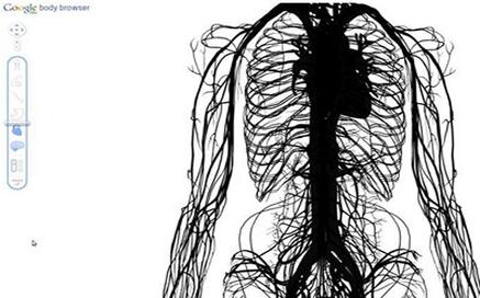 Google Body Browser: la anatomía humana en 3D | Tecnología e información | Scoop.it