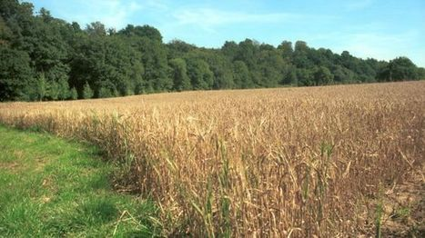 Boosting food crop yields 'can protect biodiversity' - BBC News | Jeff Morris | Scoop.it