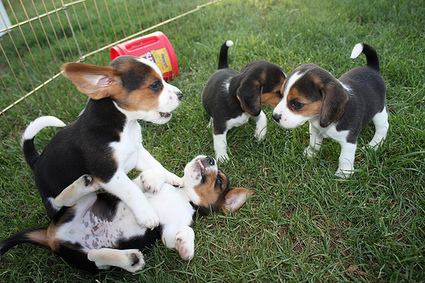 Puppies and the Future of Legal Technology and Information – Sarah Glassmeyer | Library Collaboration | Scoop.it