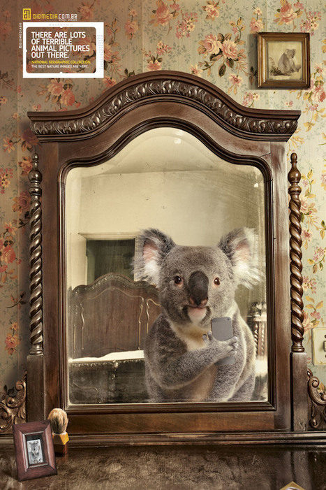Creative 'Selfies from Nature' Ads Feature Animals Snapping Mirror Selfies - PetaPixel | Creative advertising | Scoop.it