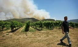 Australian wine under threat from climate change, as grapes ripen early | Farming, Forests, Water, Fishing and Environment | Scoop.it