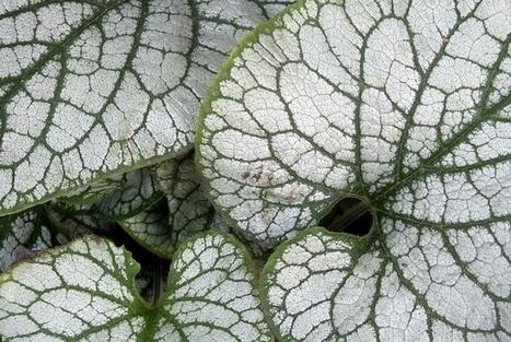 Hermosas fotos de fractales en la naturaleza - VeoVerde | Infraestructura Sostenible | Scoop.it
