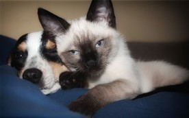 Create A Poison-Free Home for Your Pet | Natural Pet Care | Scoop.it
