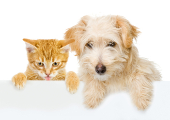 Make sure to include pets in estate planning | Estate Planning New Mexico | Scoop.it