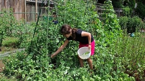 Grow Gardens With Your Kids to Encourage Eating More Vegetables | Nutrition Today | Scoop.it