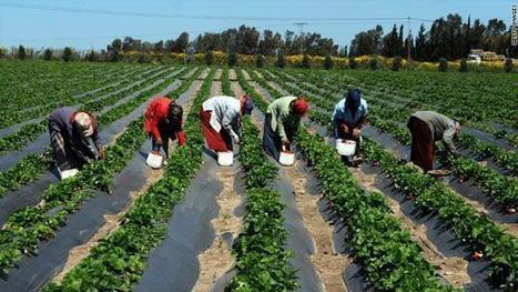 Le Sénégal : de belles opportunités à transformer | Efficient Innovation | Chimie verte et agroécologie | Scoop.it