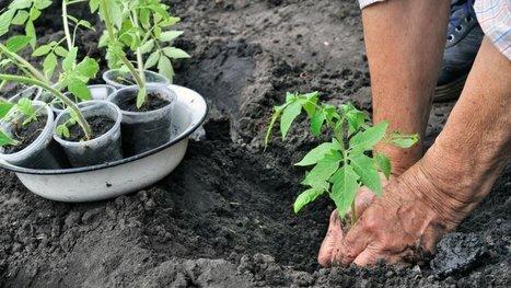 Conservées en Russie depuis des décennies, des semences rares ont été plantées près de Lyon ! | Coopération, libre et innovation sociale ouverte | Scoop.it