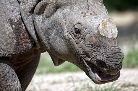 Fighting rhino poaching in SA: there's an app for that | What's Happening to Africa's Rhino? | Scoop.it