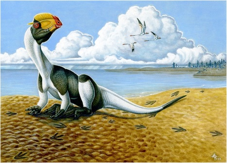 A Tale of Tail Traces | Paleontology News | Scoop.it