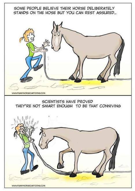 Is your horse smart enough to deliberately spray you? | Equestrian Humor | Scoop.it