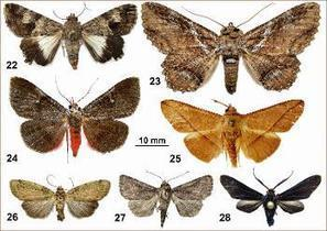 Une série de nouveautés concernant les papillons des DOM vient d'être publiée | EntomoNews | Scoop.it