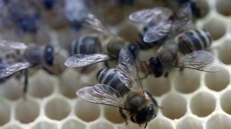 Il faut sauver les abeilles des pesticides - Francetv info | Abeilles, intoxications et informations | Scoop.it