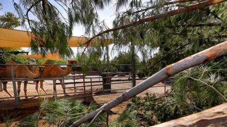 'Phoenix AZ Zoo still closed, about 3,000 powerless after storm' | News You Can Use - NO PINKSLIME | Scoop.it