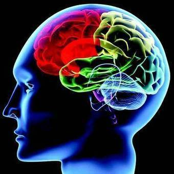 Our brain good at vision multitasking: Study - The Times of India   Visual Heuristics   Scoop.it