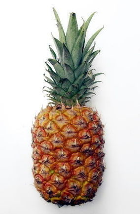 Protecting pineapple | Arizona Daily Star | CALS in the News | Scoop.it