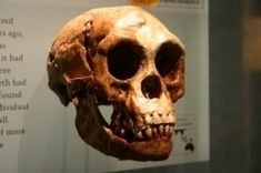 Hobbits Were a Separate Species, Ancient Chompers Show | Aux origines | Scoop.it