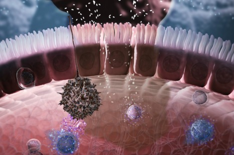 Immunology in the Gut Mucosa: a great Nature Immunology animation!!!! | Immunology for University Students | Scoop.it