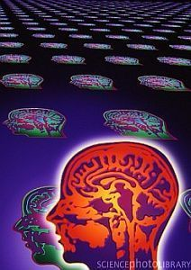» Genetic Regulation of Brain Development Implicated in Mental Illness  - Psych Central News | Science by Arancha | Scoop.it