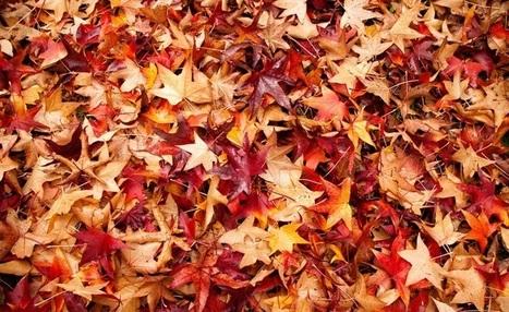 L'automne et moi : 7 conseils pour bien vivre la saison | Tarot-therapie.fr | Scoop.it
