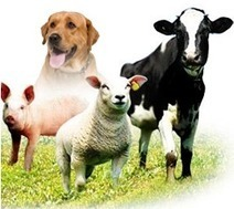 Veterinary Medicine in India,Veterinary Medicine Supplier in India,Veterinary Medicine Distributor in India   Veterinary Medicine   Scoop.it