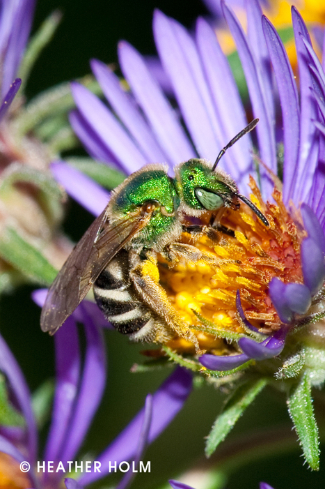 Managing your Native Landscape to Support Pollinators | 100 Acre Wood | Scoop.it