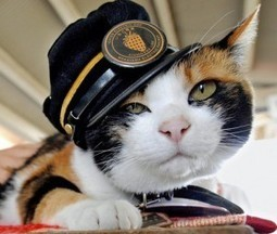 Tama- Japan's Cutest Stationmaster the Cat Hero of Kishi Station.   News Update   Scoop.it