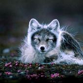 Burlington Coat Factory: Go fur-free to help animals | GarryRogers Biosphere News | Scoop.it