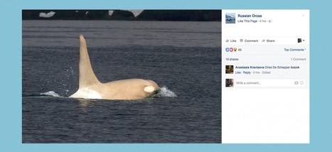 On a retrouvé l'orque blanche Iceberg, et elle est toujours en vie | Arctique et Antarctique | Scoop.it