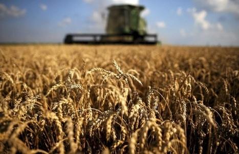 Vilja ruokkisi yhdeksän miljardia – jos se käytettäisiin ruoaksi | energy, environment, renewables, bio | Scoop.it