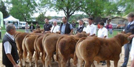 Le concours de bovins confirmé | Agriculture en Dordogne | Scoop.it