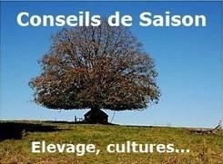 Conseils de saison 35 - Temps peu favorable aux pucerons - 13/11/2013 | Conseil de saison Culture et Elevage - Agriculture | Scoop.it