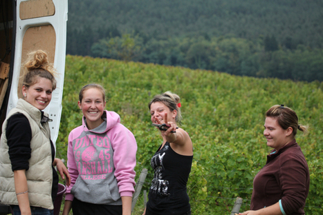 Harvesting: hand or by machine | Wine website, Wine magazine...What's Hot Today on Wine Blogs? | Scoop.it