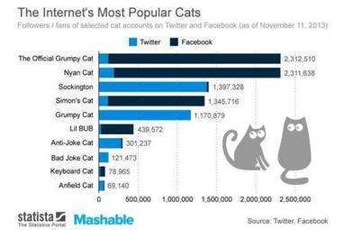 Qui est le chat préféré des internautes? Une étude sérieuse y répond (vidéos) | Mais n'importe quoi ! | Scoop.it