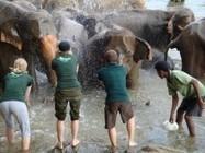 Sri Lanka Wild Elephants | Thrill Of Asia | Scoop.it