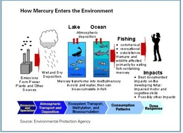 Deeper-Living Fish Have More Mercury - Blue Ocean Institute   All about water, the oceans, environmental issues   Scoop.it