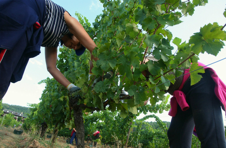 Récord de ventas de los vinos del Bierzo en el inicio del 2016 - ileon.com | Noticias DENOMINACIONES DE ORIGEN DE ESPAÑA | Scoop.it