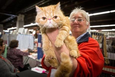VIDEO. Salon chiens-chats à Paris : tout pour votre animal préféré   CaniCatNews-actualité   Scoop.it